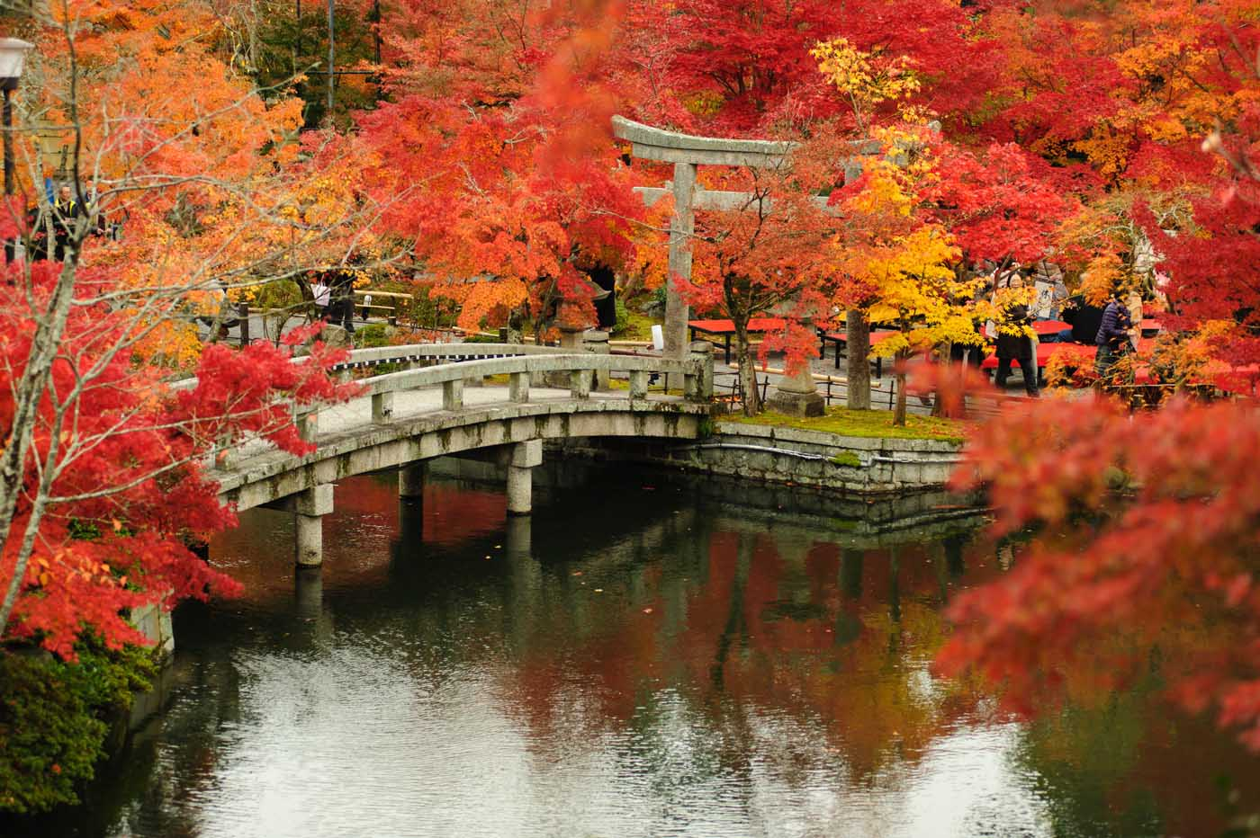 Roter Japanischer Ahorn Kyoto Travel Costs & Prices - Imperial Palaces, Sento Bath