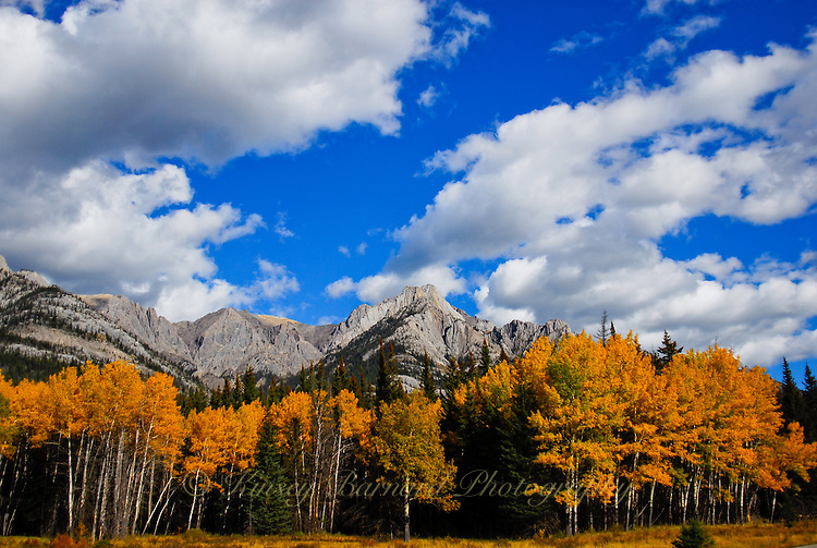 Hd Fall Pictures Wallpaper Aspen Aglow At Banff The Liberated Photographer