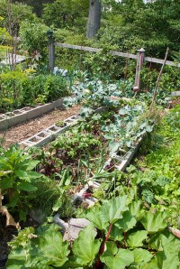 Cinder block raised beds in vegetable garden
