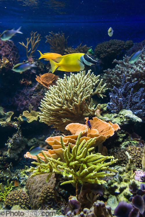 Bellingham Aquarium
