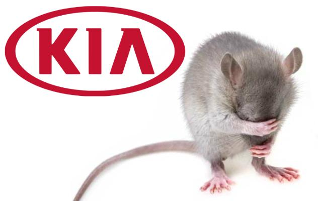 Kia Soy-Based Wiring Chewed by Rodents Lawsuit CarComplaints