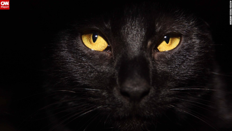 Cute Cats And Kittens Wallpaper Hd Cat Themes To Be A Black Cat On Halloween Cnn
