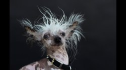 Small Of Ugly Dog Breeds