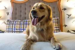 Splendid Reno Hotels That Allow Dogs Nyc 170807171653 Hotel Pets Kimpton Dakota Hotels That Allow Dogs