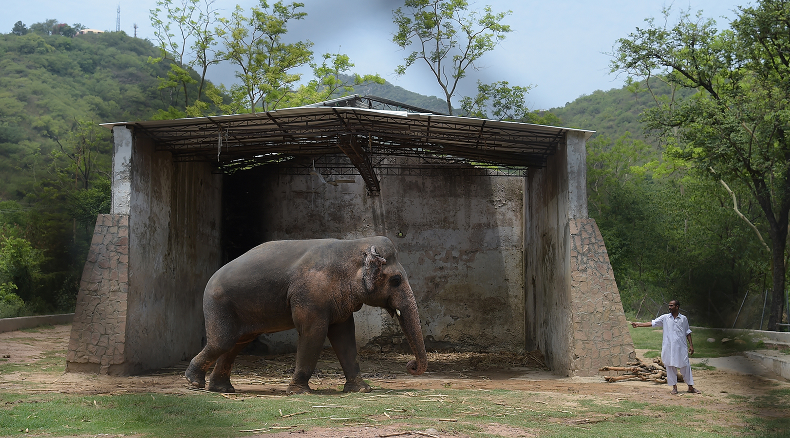 Kavaan Known As The World S Loneliest Elephant Is On His Way To Cambodia After Cher Campaign To Free Him Cnn Travel