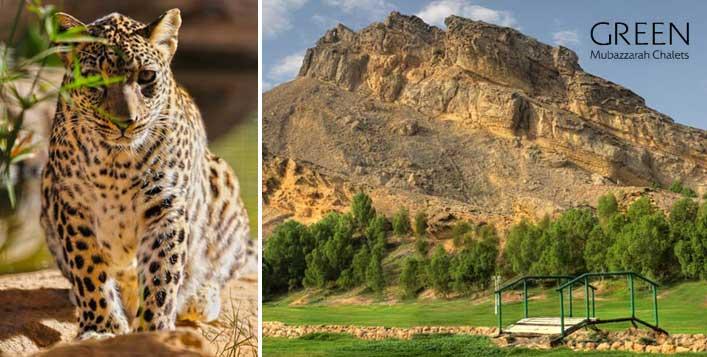 Green Mubazzarah Chalet Stay Al Ain Zoo