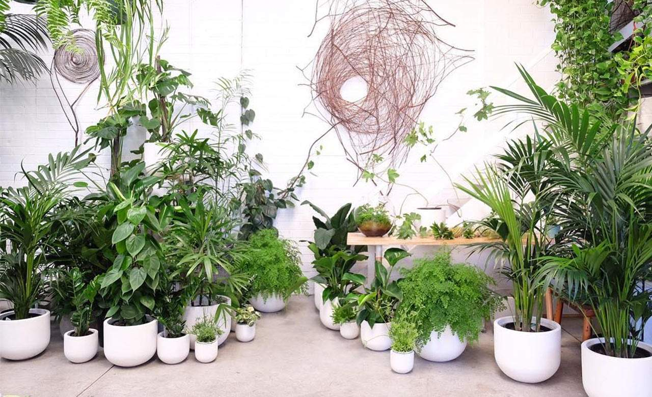 Popular Indoor Tree Plants The Best Places To Buy Plants In Melbourne Concrete