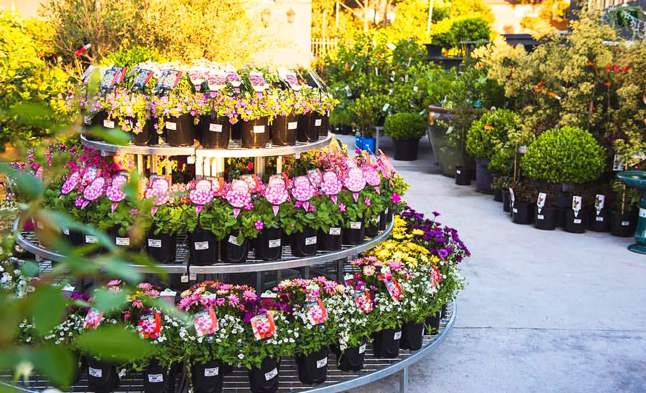 Buy Plants Sydney The Best Places To Buy Plants In Sydney Concrete