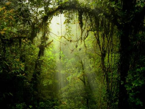 Waterfall Desktop Wallpaper Hd Top 4 Costa Rica Cloud Forest Destinations Costa Rica
