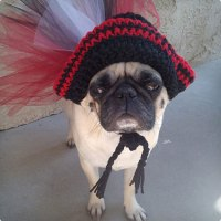 40 Pirate Dog Costumes That Will Melt Your Heart | Costume ...