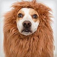 74 Genius Dog and Owner Costumes | Costume Yeti