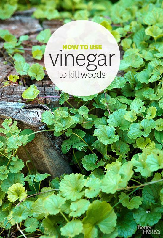 17 Ways Vinegar Can Clean Up Your Life Thegoodstuff