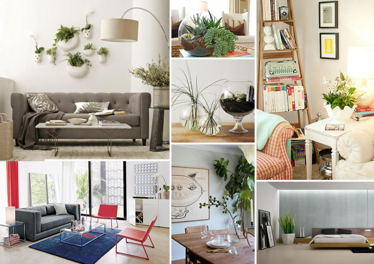 Home Decor Plants Decorating With Houseplants