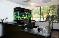 10 Cool Fish Tanks for Your Office