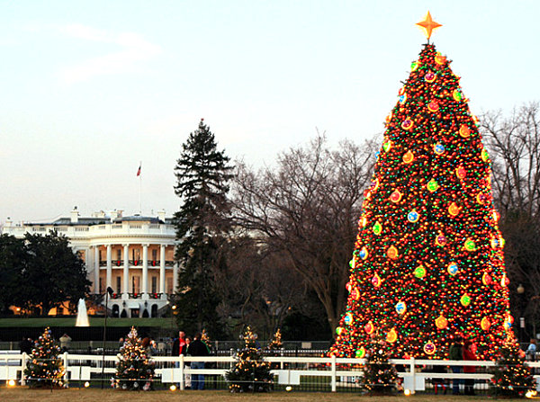 Tree Lighting Ceremony Dc The 10 Most Amazing Christmas Trees In The U.s.