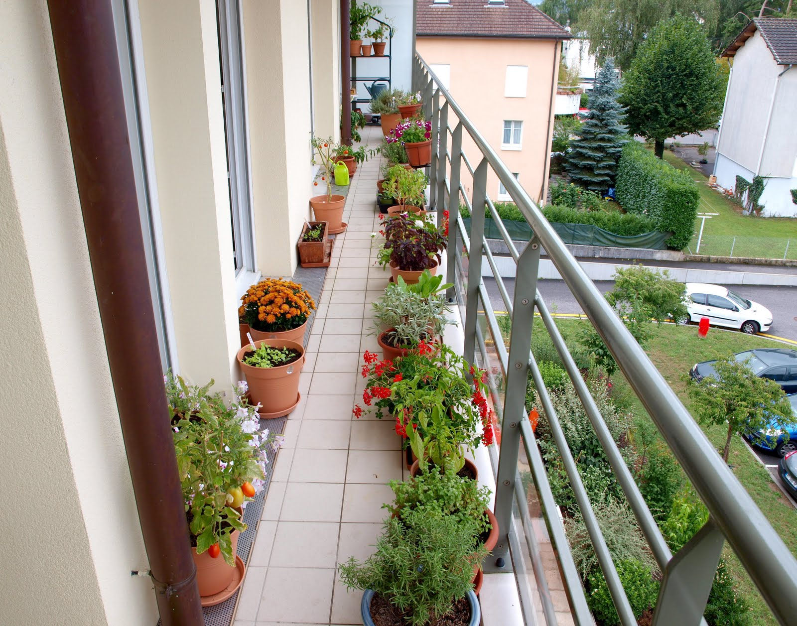 Balcony Privacy Plants Urban Oasis Balcony Gardens That Prove Green Is Always In