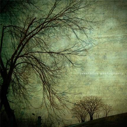 Feeling Wallpaper Hd Green Mysterious Trees Art