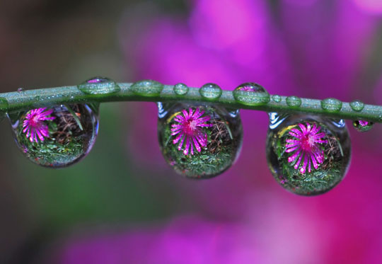 45 Stunning Examples of Water Drop Reflection Photography Designbeep