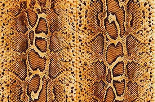 Pink Animal Print Wallpaper A Collection Of Free Snake Skin Textures For Designers