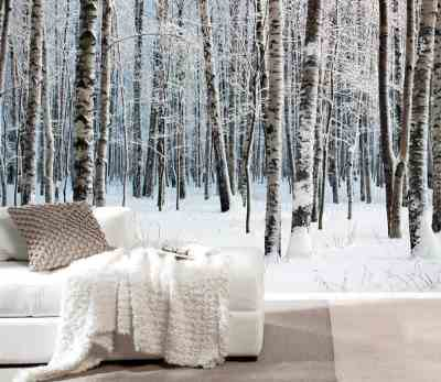 Birch Trees Wallpapers Add a Natural Touch To Your Home