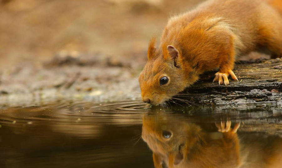 Cute Circle Wallpaper Squirrel Meeting By The Tree Log Wallpaper Animal