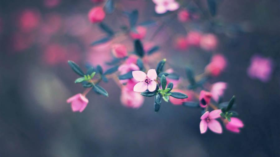 Hd Lavender Wallpaper Snowdrop In The Sunrise Wallpaper Flower Wallpapers 47817