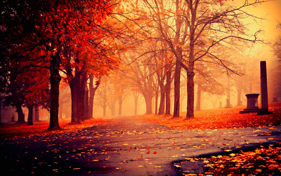 Galaxy S4 Fall Wallpaper Girl In The Autumn Park Wallpaper Wallpaper Wide Hd