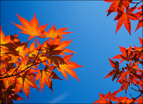 Fall Themed Wallpaper Using Complementary Colors Digital Photo Secrets