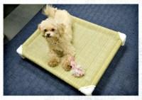 9 DIY Dog Bed Ideas Using PVC Pipe - DIY & Crafts