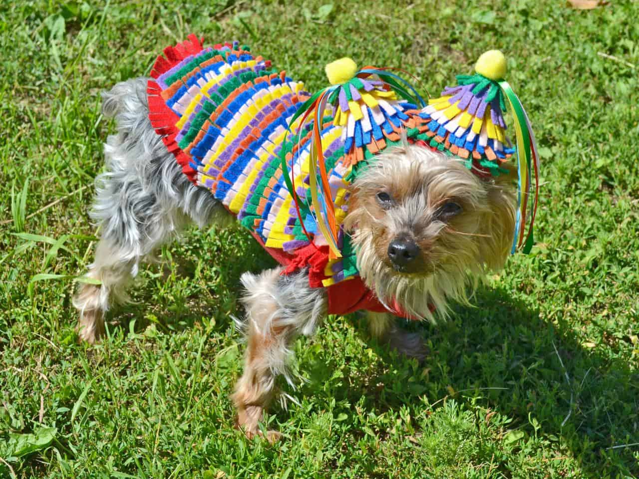 Funny DIY Halloween Costumes for Dogs