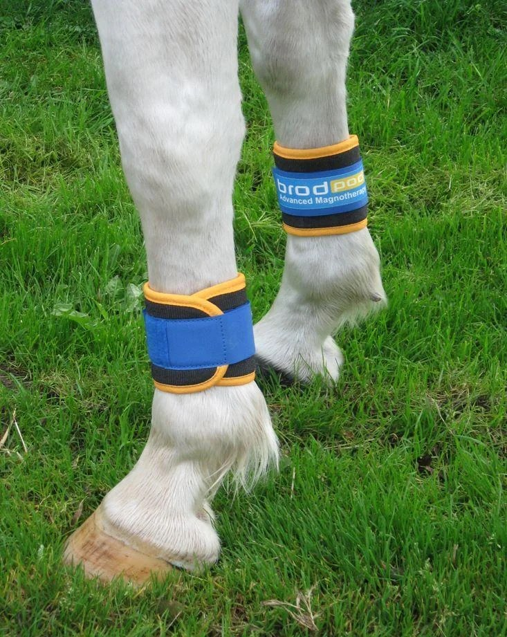 Brodpod Magnetic Horse Boots Magnetic Leg Wraps For Horses