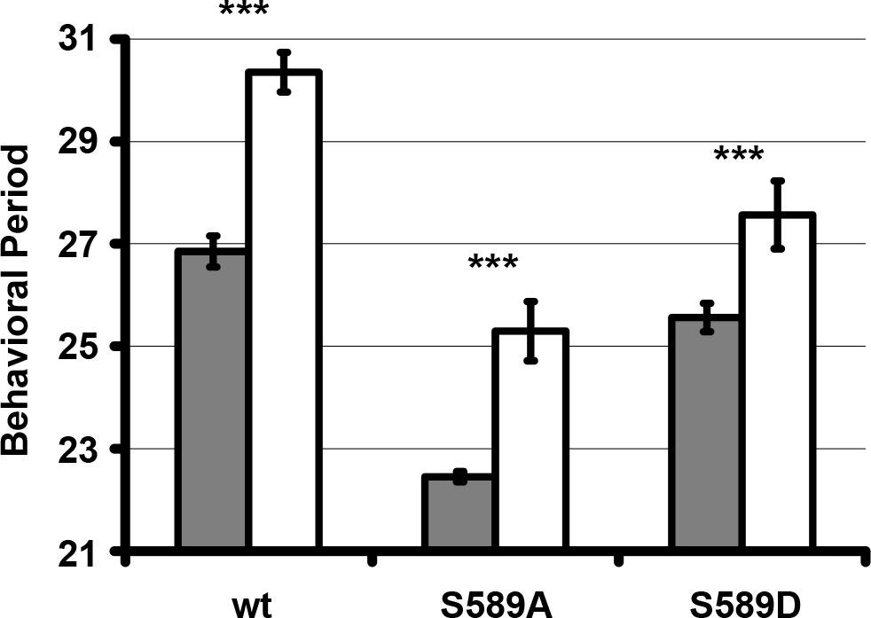 CK1/Doubletime activity delays transcription activation in the