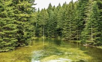 River Forest Nature Wall Paper Mural   Buy at UKposters