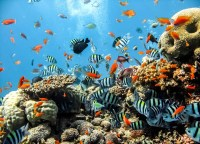 Sea Ocean Fish Corals Wall Paper Mural | Buy at EuroPosters