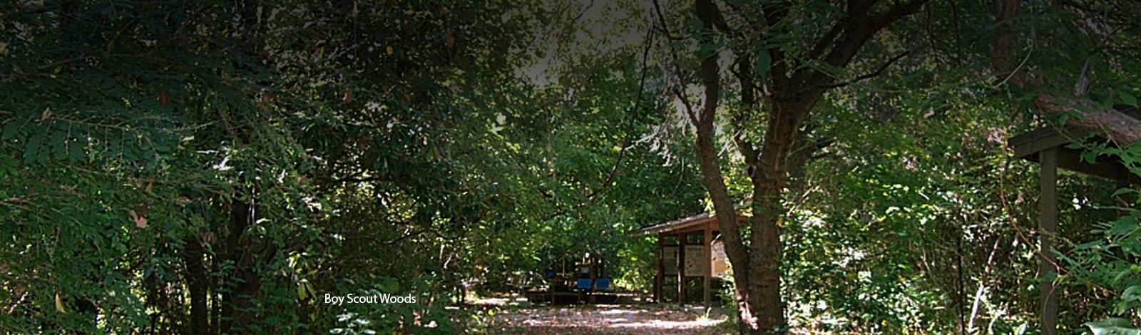 Boy Scout Woods High Island Sanctuaries Houston Audubon