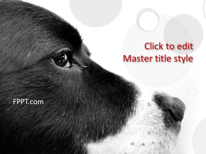 3d Wallpaper Of Dogs Free Black Powerpoint Templates