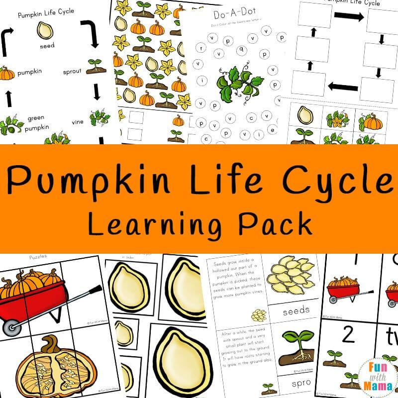 Pumpkin Life Cycle - Fun with Mama