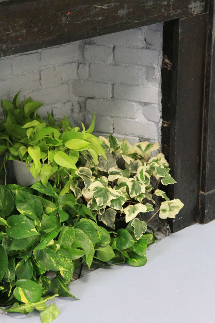 Cubicle Wall Planter Diy A Living Wall For The Office Lazy Person S Edition Gardenista