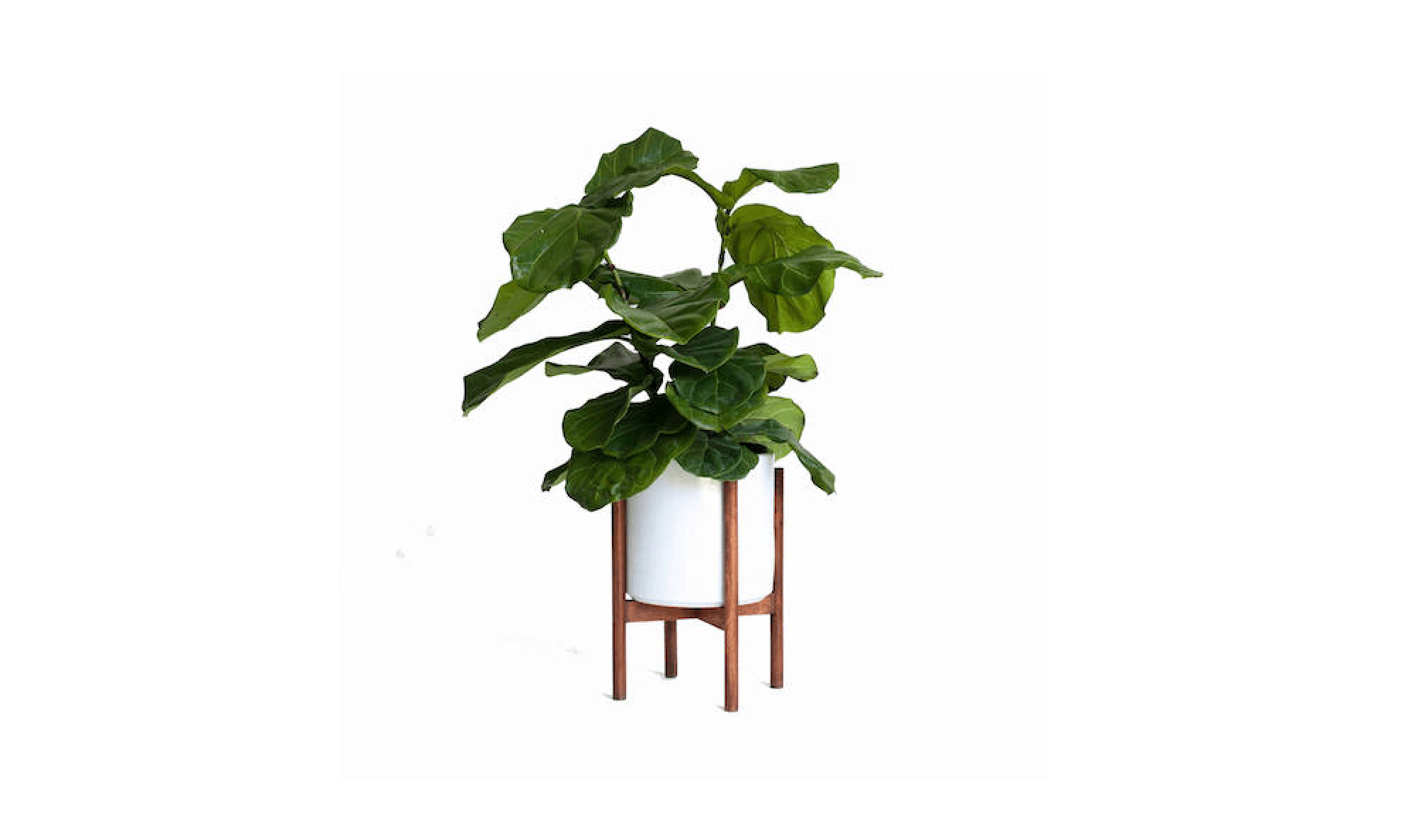 Simple Planters Midcentury Modern Cylinder Planters 10 Stylish Pots For Houseplants