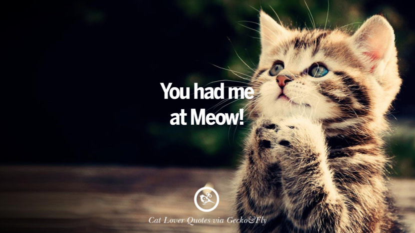 Cute Motivational Wallpaper 25 Cute Cat Images With Quotes For Crazy Cat Ladies
