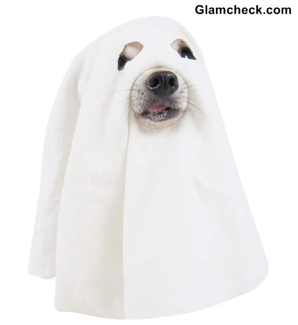 Halloween DIY Ghost Costume for your Dog
