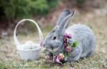 Galleries Cute Easter Bunnies Baby Bunnies Easter Bunny Easter Bunnies