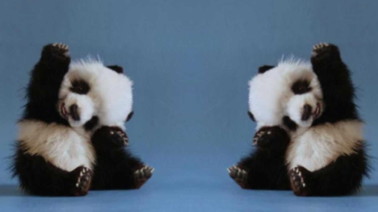 Cute Saying Hd Wallpapers Cute Baby Panda Waving
