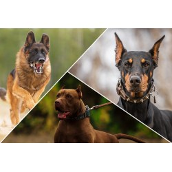 Small Crop Of Calm Dog Breeds