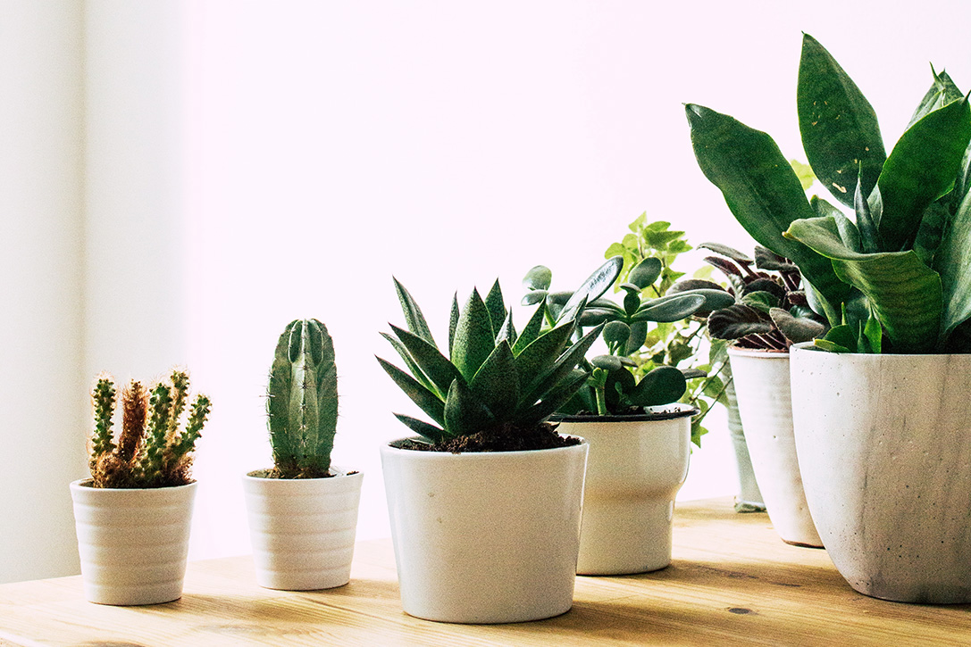Indoor Plants Primer How To Care For Indoor Plants Hiconsumption