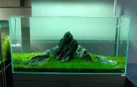 Nature Aquariums and Aquascaping Inspiration
