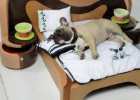 21 Cool Furniture For Pets