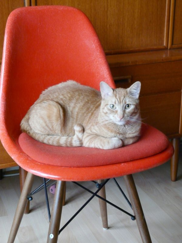 Rocking Chair Eames 30 Cute Cats That Love The Eames Chairs