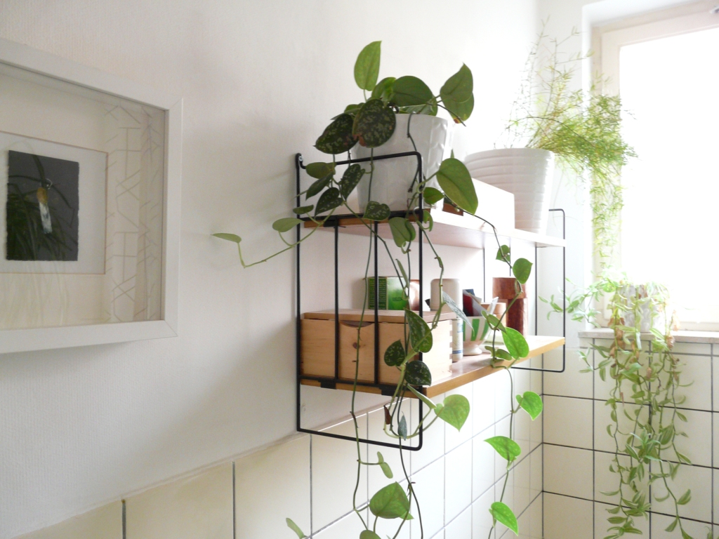 Home Decor Plants 13 Amazing Ideas For Your Indoor Plants Love The Garden