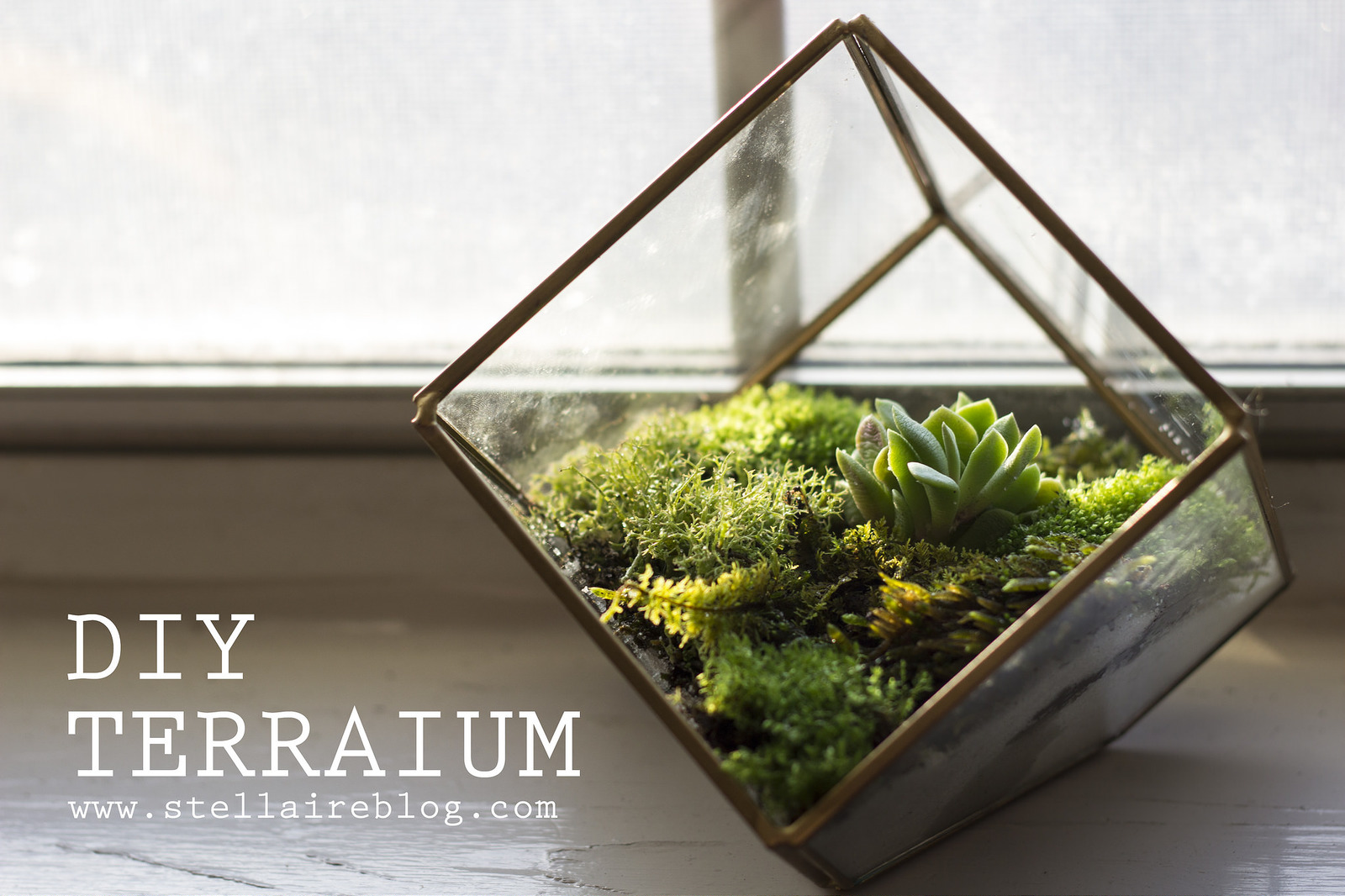 Diy Terrarium Stand What It Means To Decorate With Terrariums Key Tips And